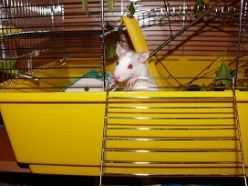 Pet Rat Cage Accessories