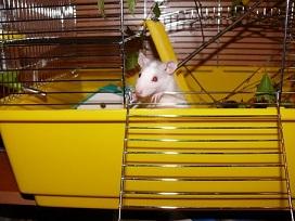 Pet Rat Cage Accessories